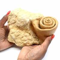 Fossile de gastéropode