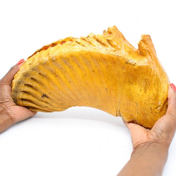 Molaire de mammouth
